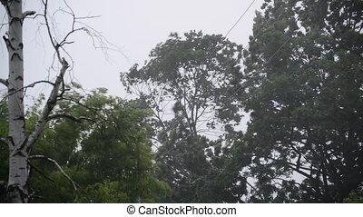 Hurricane winds and rain in summer