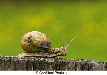 snail - hurrying snail along old log on flowering meadow