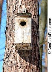 hus, fåglar