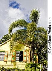 hus, palm, gul, träd