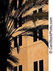 hus, palm trä