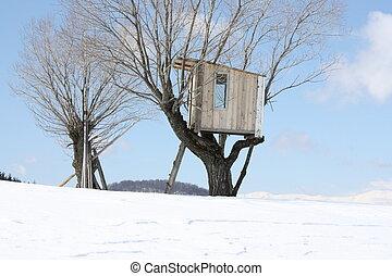 hus, träd
