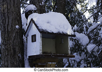hus, vinter, fugl