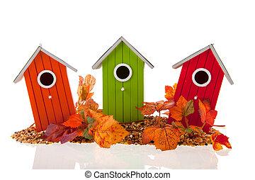 huse, blade, sæd, fugl