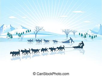 Huskies sled dog