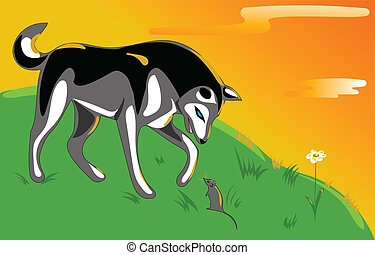 Husky and mouse - Husky sniffing mouse on a hill at sunset