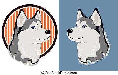 Husky dog - beautiful medal husky isolation on a white and...