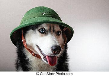 Husky dog in vintage green