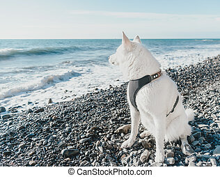 Husky dog sitting on coast