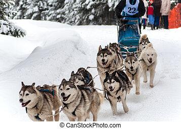 Husky dog sled