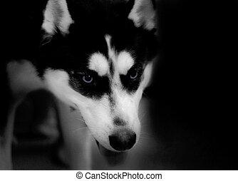 husky, low key