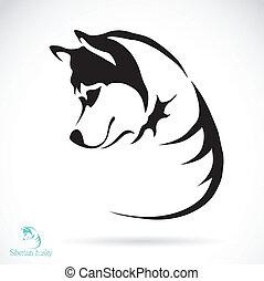 husky, imagem, vetorial, cão, siberian