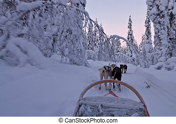 Husky sledge ride at sunset in winter wonderland (Lapland)