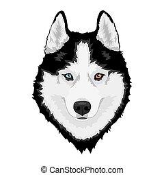 husky, sibérien, chien