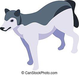 Husky wolf icon, isometric style