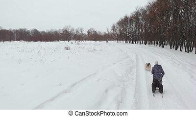 huskys, les, aérien, récréation, bourdon, compilation., suède, gens, sports neige, courant, derrière, coups, traction, husky, unique, sur, chiens, meute