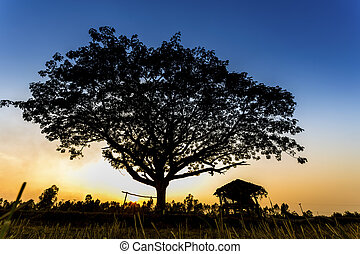 Hut and big tree in the terrace rice field over sunset