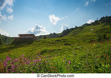 hut, berg, bloemen, voorgrond