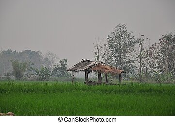 Hut in the middle of rice