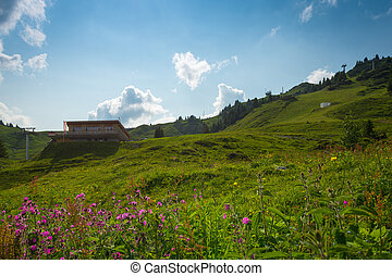 hut on mountain with flowers in foreground
