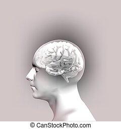 huvud, abstrakt, illustration, vektor, brain., mänsklig