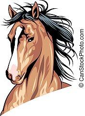 huvud, häst, brun