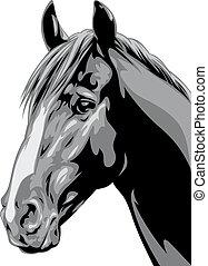 huvud, häst, grå