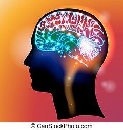 huvud, neurons