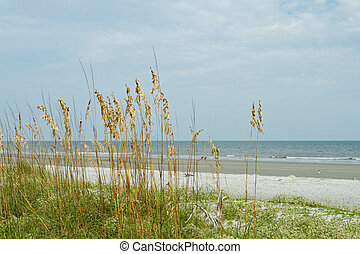 huvud, strand, hilton, överse, dyn, gräs, sand, ocean, hav ...