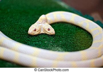 huvuden, orm, två