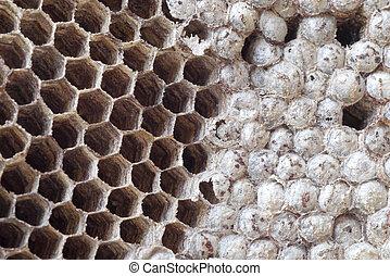 hvepse, rede