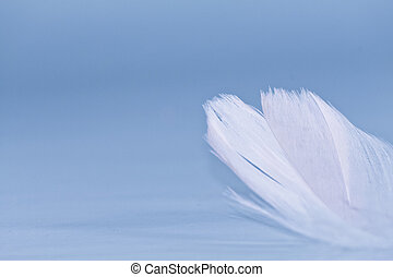 hvid fjer