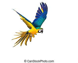 hvid, flyve, colourful, isoleret, papegøje