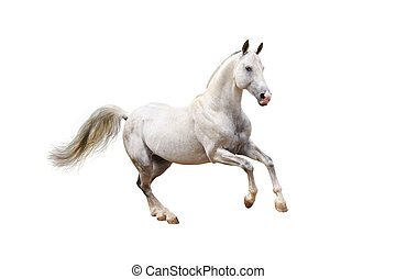 hvid hest
