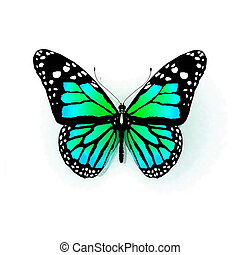 hvid, sommerfugl, isoleret