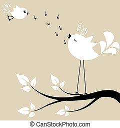 hvid, to, branch, fugle