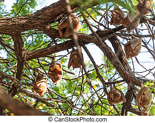 (hwange, fruit, zimbabwe), chauves-souris, pendre, arbre, ...