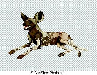 hyène, transparent, fond