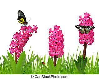 hyacint, vlinder