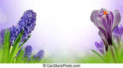 Hyacinth and Crocus