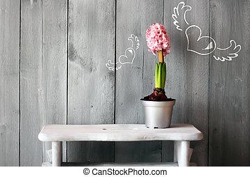 Hyacinth - Cute photo of pink hyacinth flower