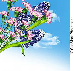 hyacinth flowers on a background of blue sky with clouds