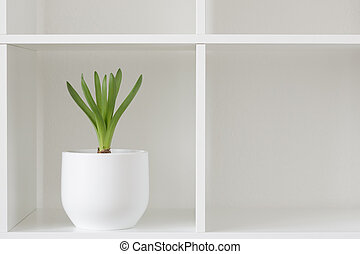 Hyacinth plant in a white pot.