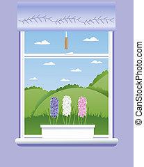 hyacinth windowsill - an illustration of three hyacinth ...