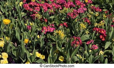 Hyde Park flowers.