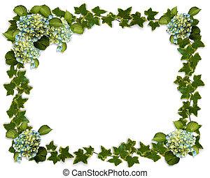 Hydrangea and Ivy border