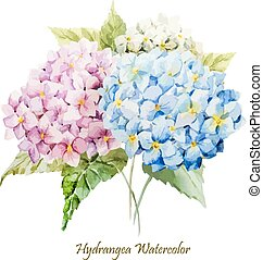 Beautiful watercolor vector hydrangea bouquet different colors