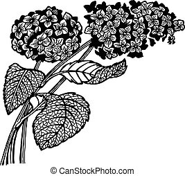 A branch of a hydrangea with floewrs and leaves. Drawing. Vintage.