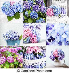 hydrangea, collage