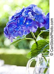 hydrangea flower in the vase